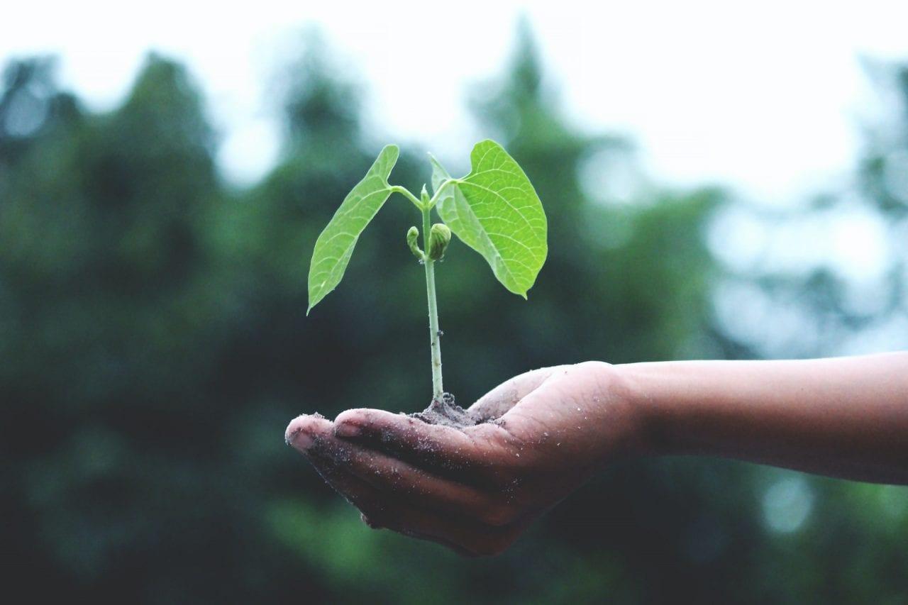 Greenwashing oder Nachhaltigkeit – verantwortungsvolle Kommunikation mit der Generation Z